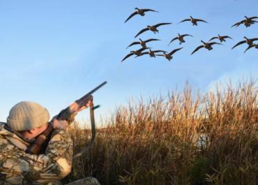 Сезон летней охоты в 2021 году